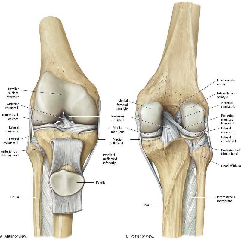 Prednji ukršteni ligament